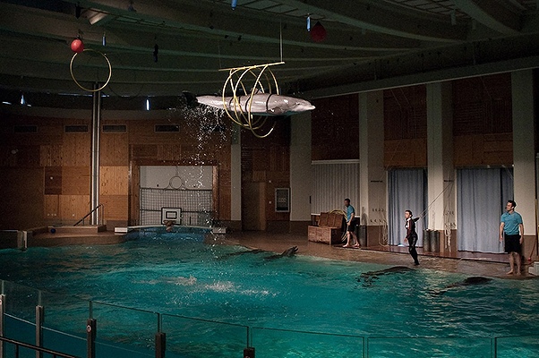 From Tank to Tank: Särkänniemi's Decision to Move Their Dolphins to Greece, Explained