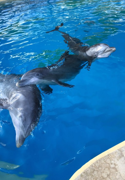 Delfi, Veera and Eevertti swimming in the pool at Attica Zoological Park on Monday August 29 in Athens suburb of Spata, Greece. Picture: Attica Zoological Park