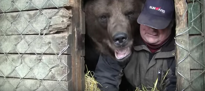Sulo Karjalainen is preparing his bear friend, Juuso, for hibernation. A screen capture from YouTube.