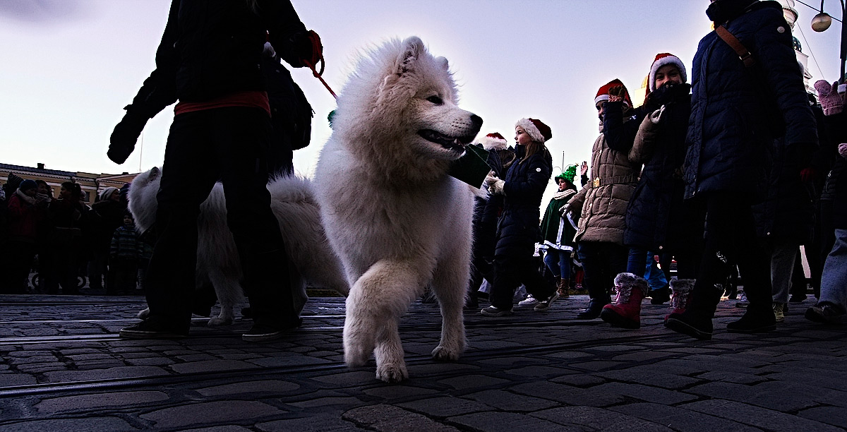 Such A Doggy Nation! – In Finland, Pets Are Important Family Members