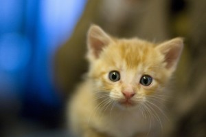 A Kitten at the Airport Stops Finnair's Take-Off