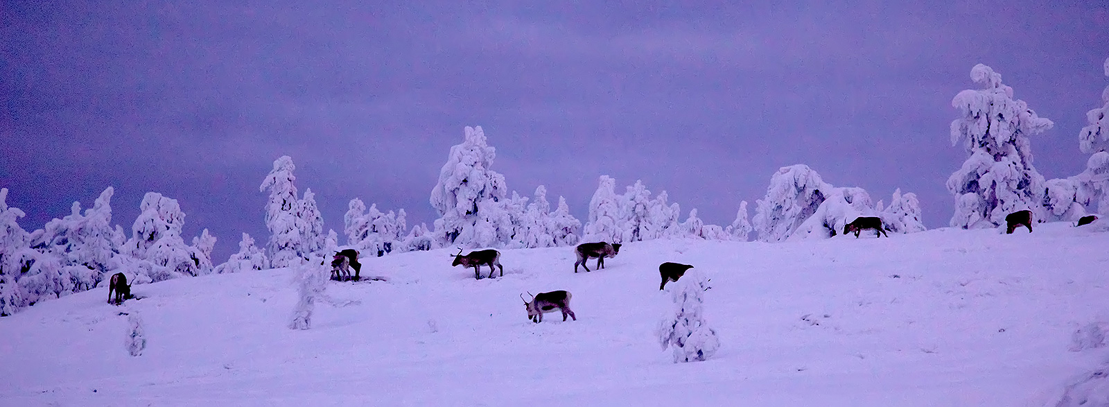 Could A Flock of Reindeer Replace the Guggenheim Art Museum in Helsinki?