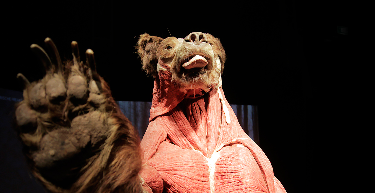 Animal Inside Out Exhibition Takes the Visitor to an Anatomical Safari