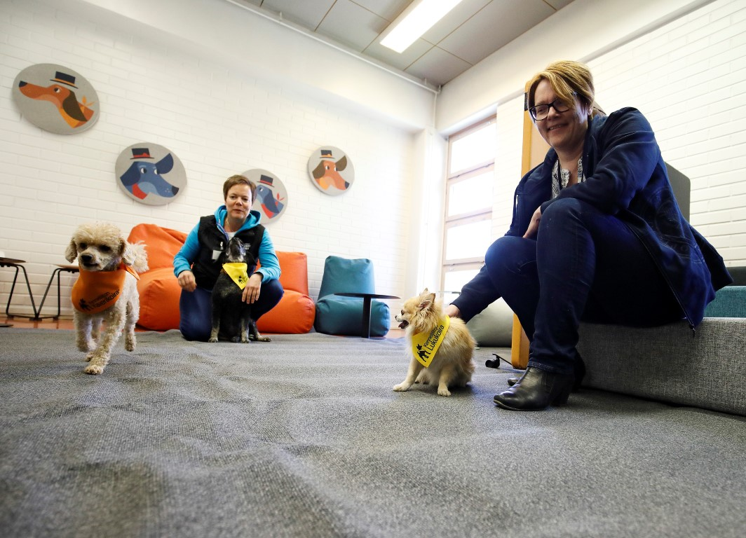 In Jyväskylä, Dogs Help University Students in Their Studies