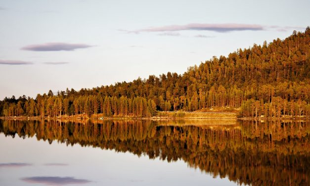 Finnish Forest Industry to End Collective Bargaining; Companies' Needs Will Be Better Met, According to Metsä Group's CEO