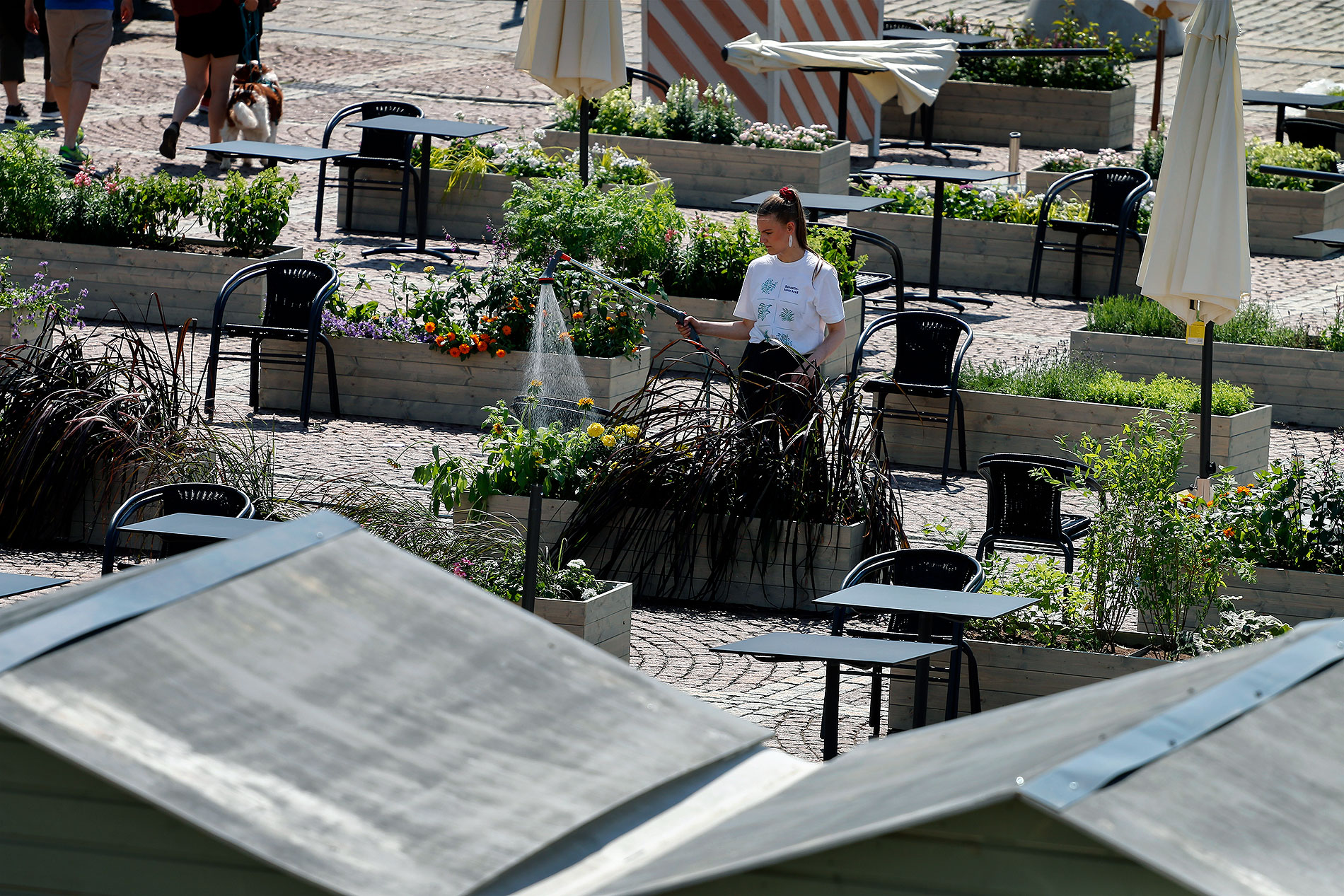The allotment garden is being watered in the Senate Square on Friday, June 26, 2020. Picture: Tony Öhberg/Finland Today